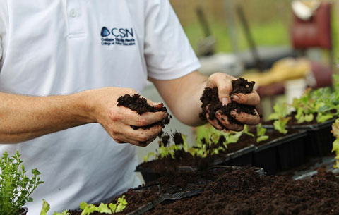 CSN Plants for Sale: Annuals, Perennials, Herbs & Vegetables